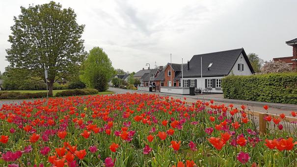Nyanlagt blomstrende område ved Algestrups infotavle. Fotograf Per Møller fra Dagbladet Køge (sn.dk)